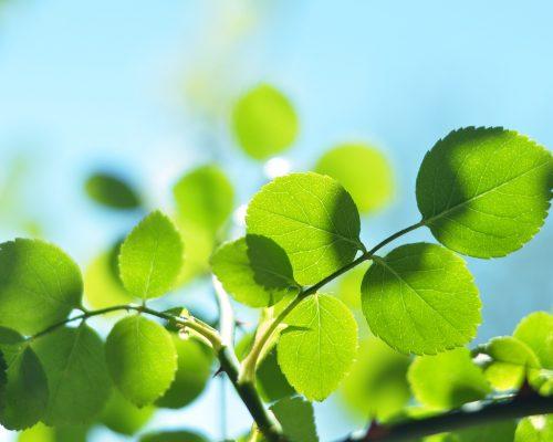 leaves-2469000_1920